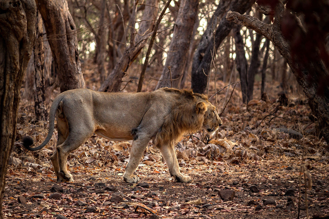 Photo of Wilderness in Forest By Dinesh K Khunt