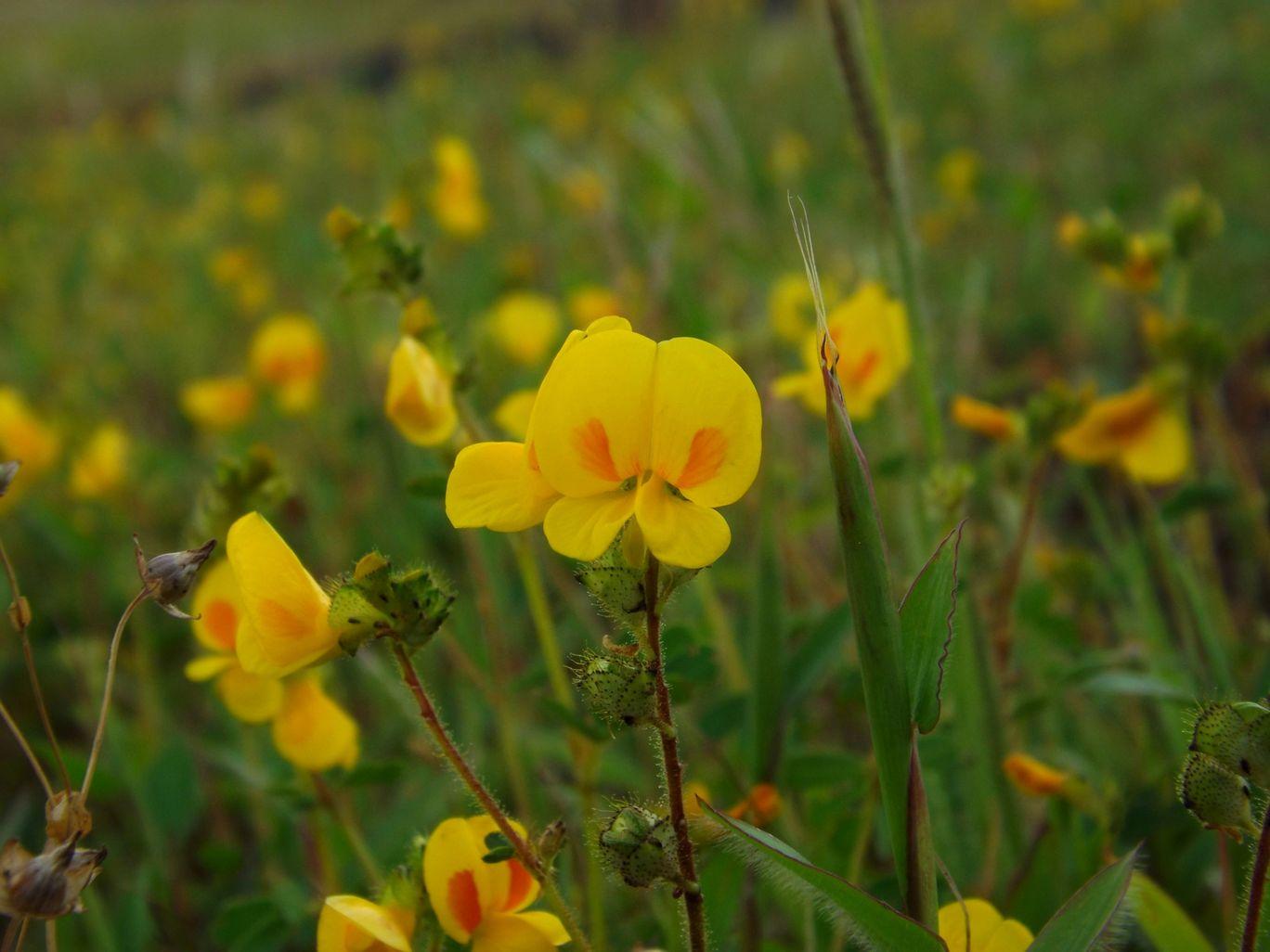 Photo of Kaas Plateau of Flowers By Prathamesh Ligde