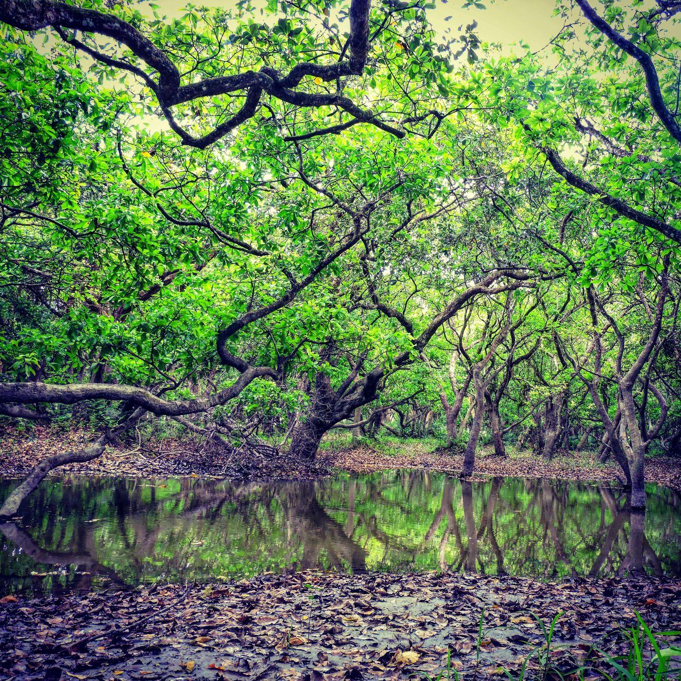 Photo of Laokhowa Wildlife Sanctuary By Abhishek Das