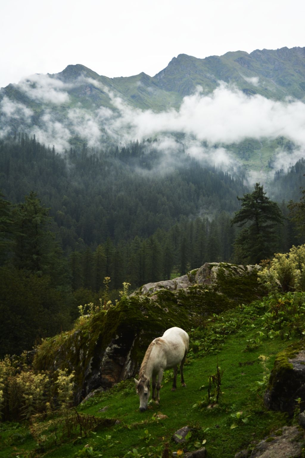 Photo of Kutla By Madhurima Dutta