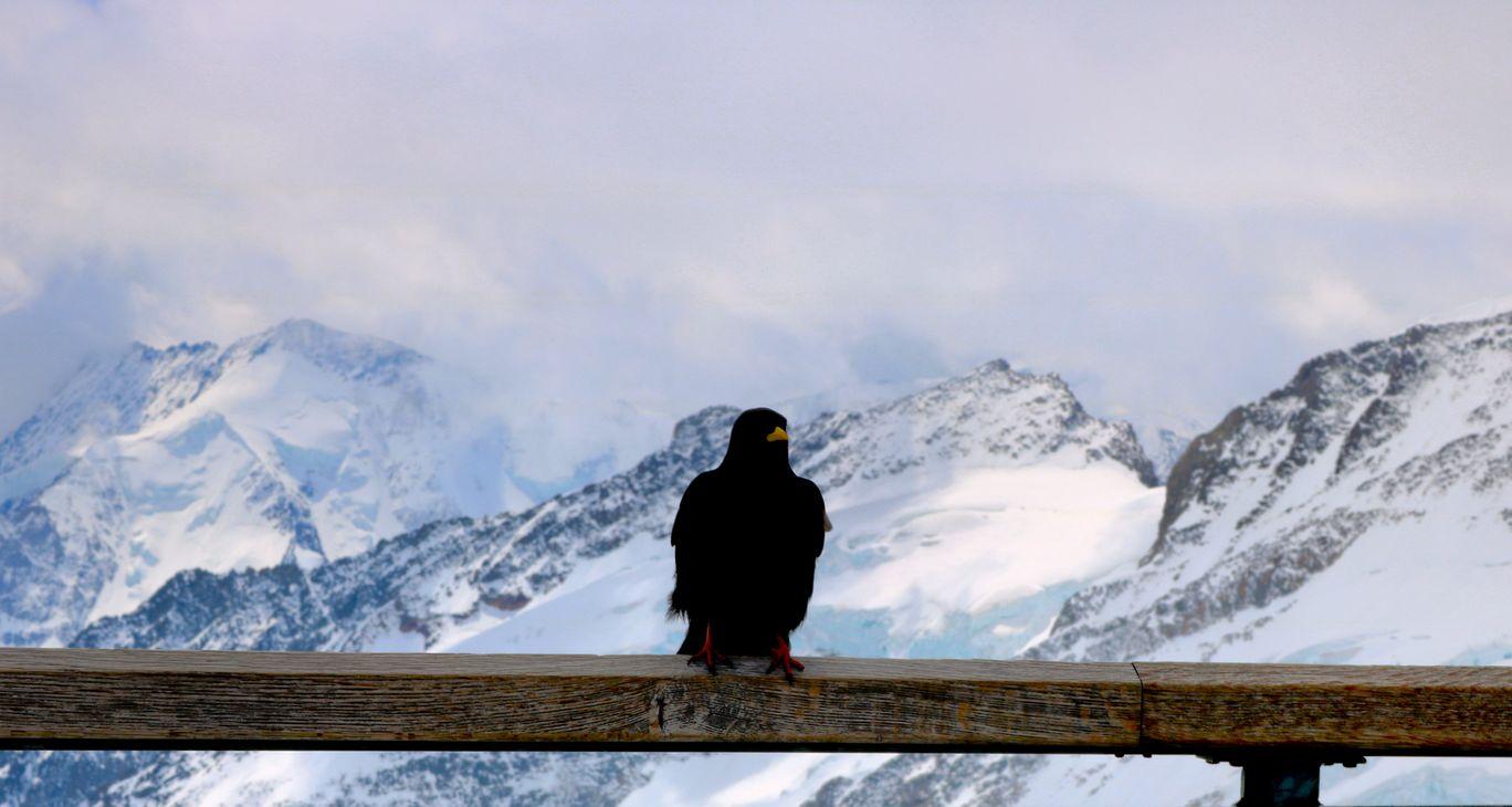 Photo of Jungfraujoch By Shital Khatri