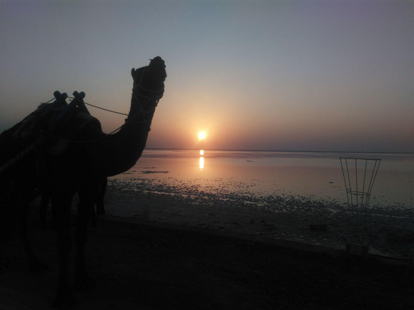Photo of The Great Rann of Kutch By Mahesh Maddala