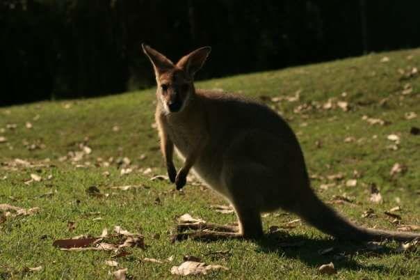 Photo of Lone Pine Koala Sanctuary By Neha Mathrani