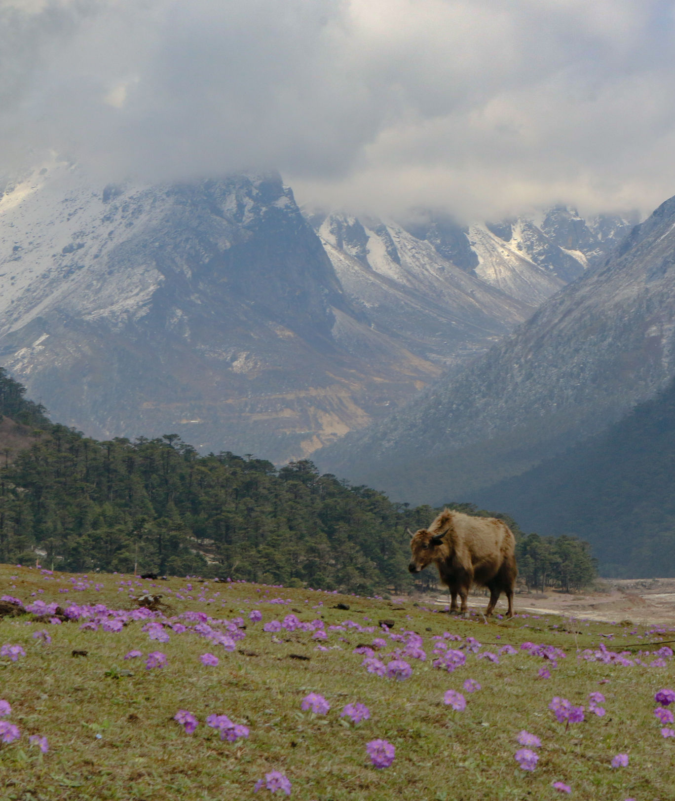 Photo of Yumthang By S A N D Y
