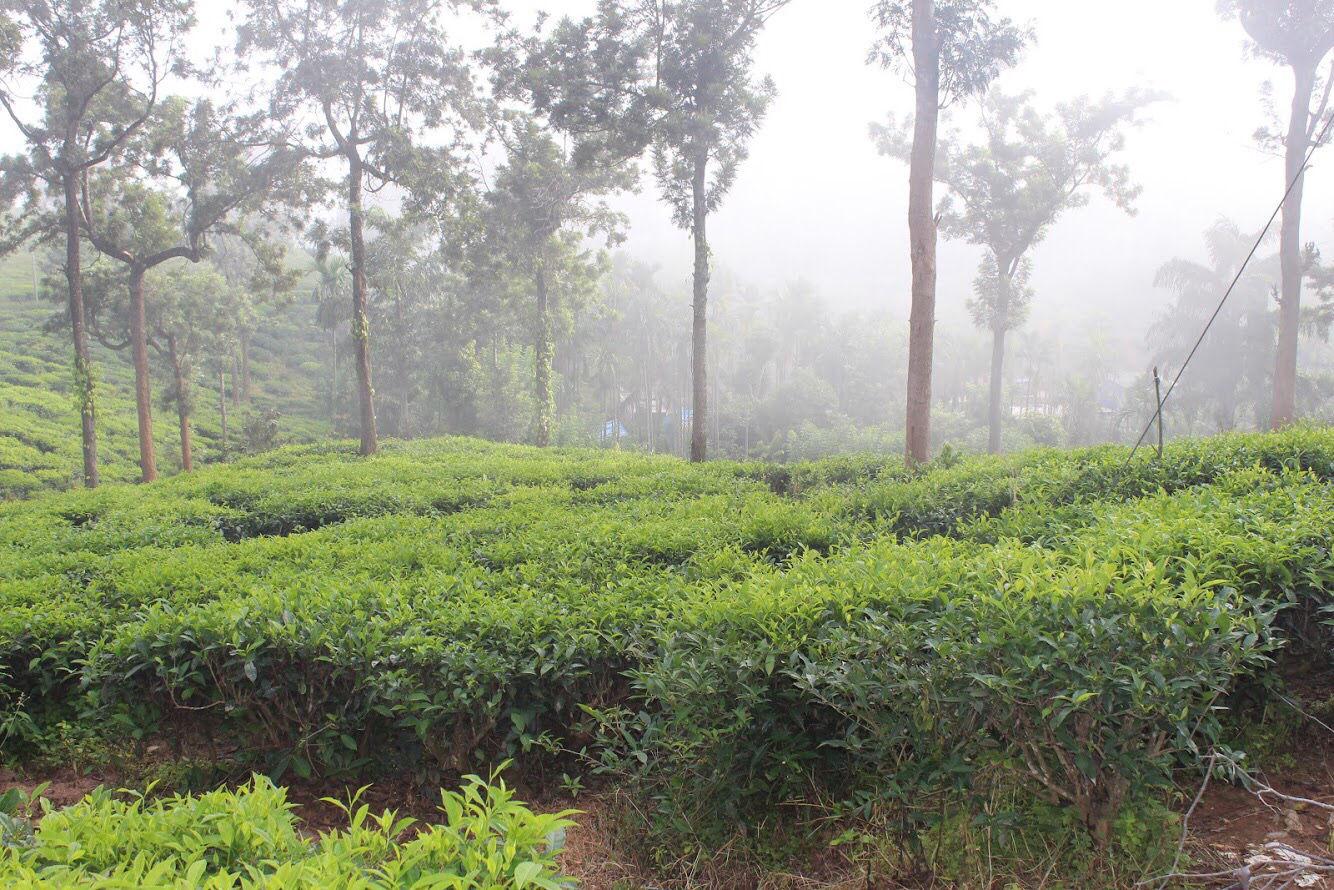 Photo of Bike Trip : Kerala By Somashekar Somu