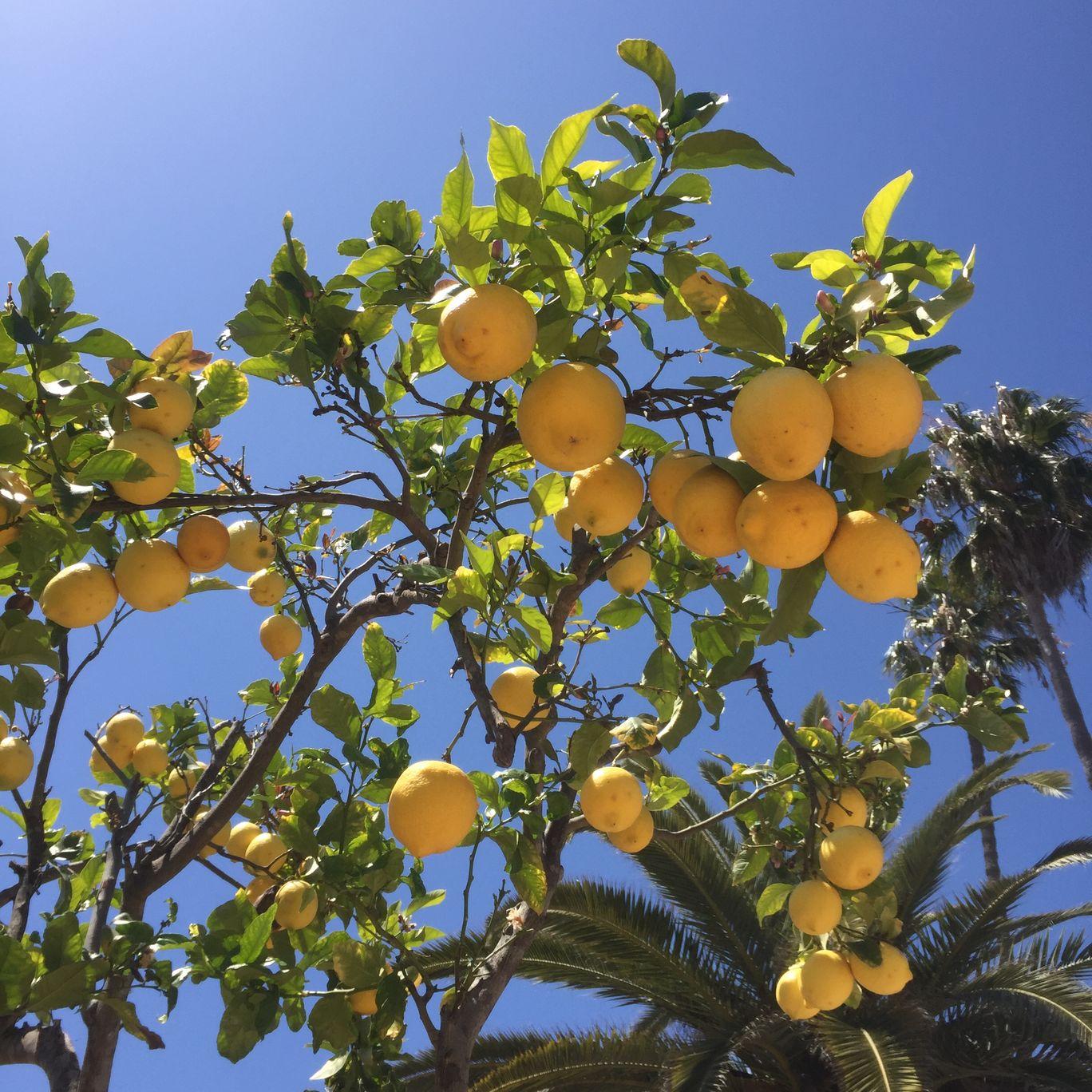 Photo of Santa Barbara By Shikha