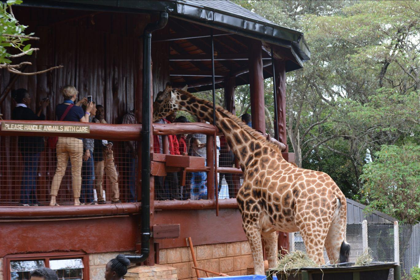 Photo of Nairobi National Park By Siddharth Joshi