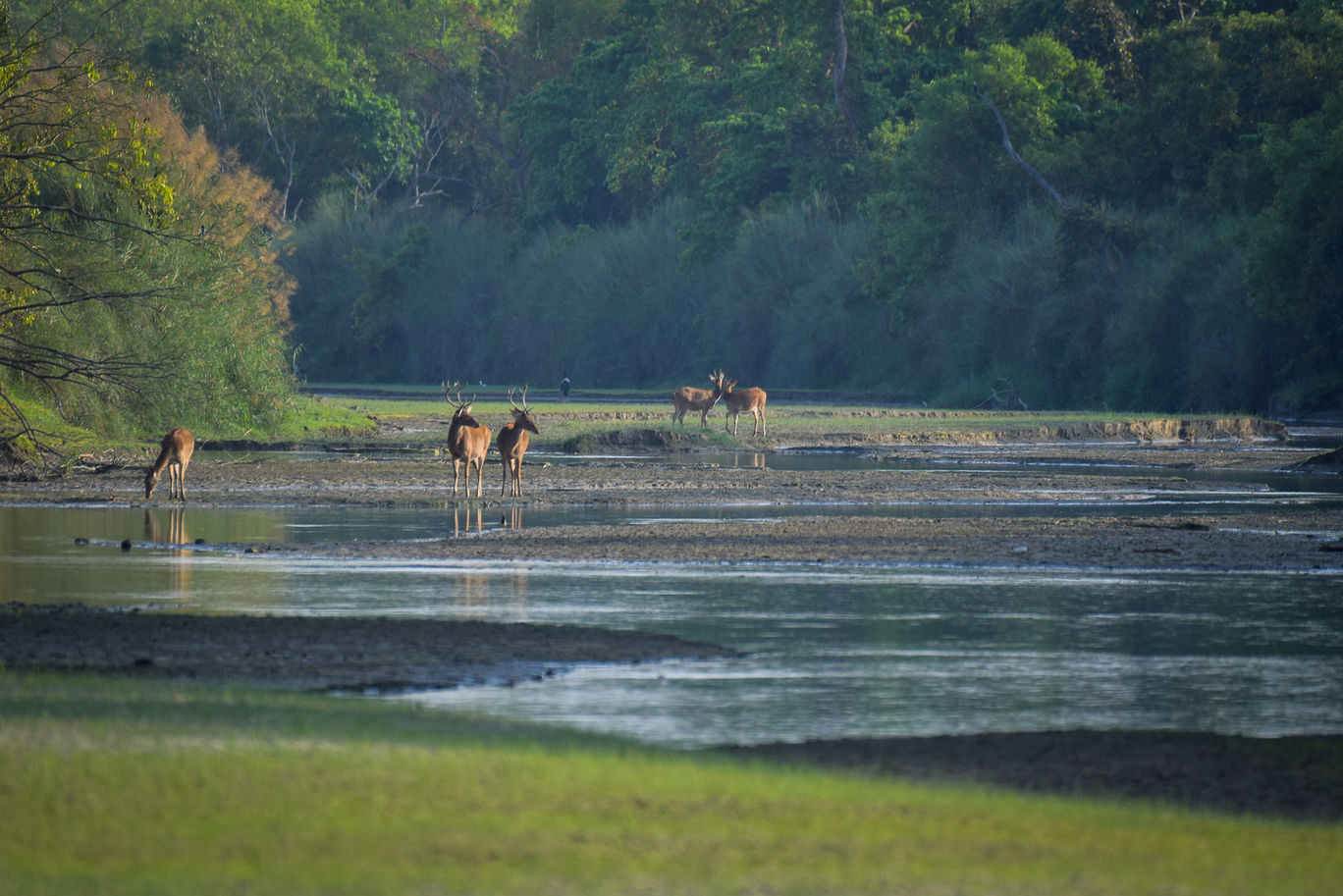 Photo of Dudhwa Tiger Reserve By Diana Banik