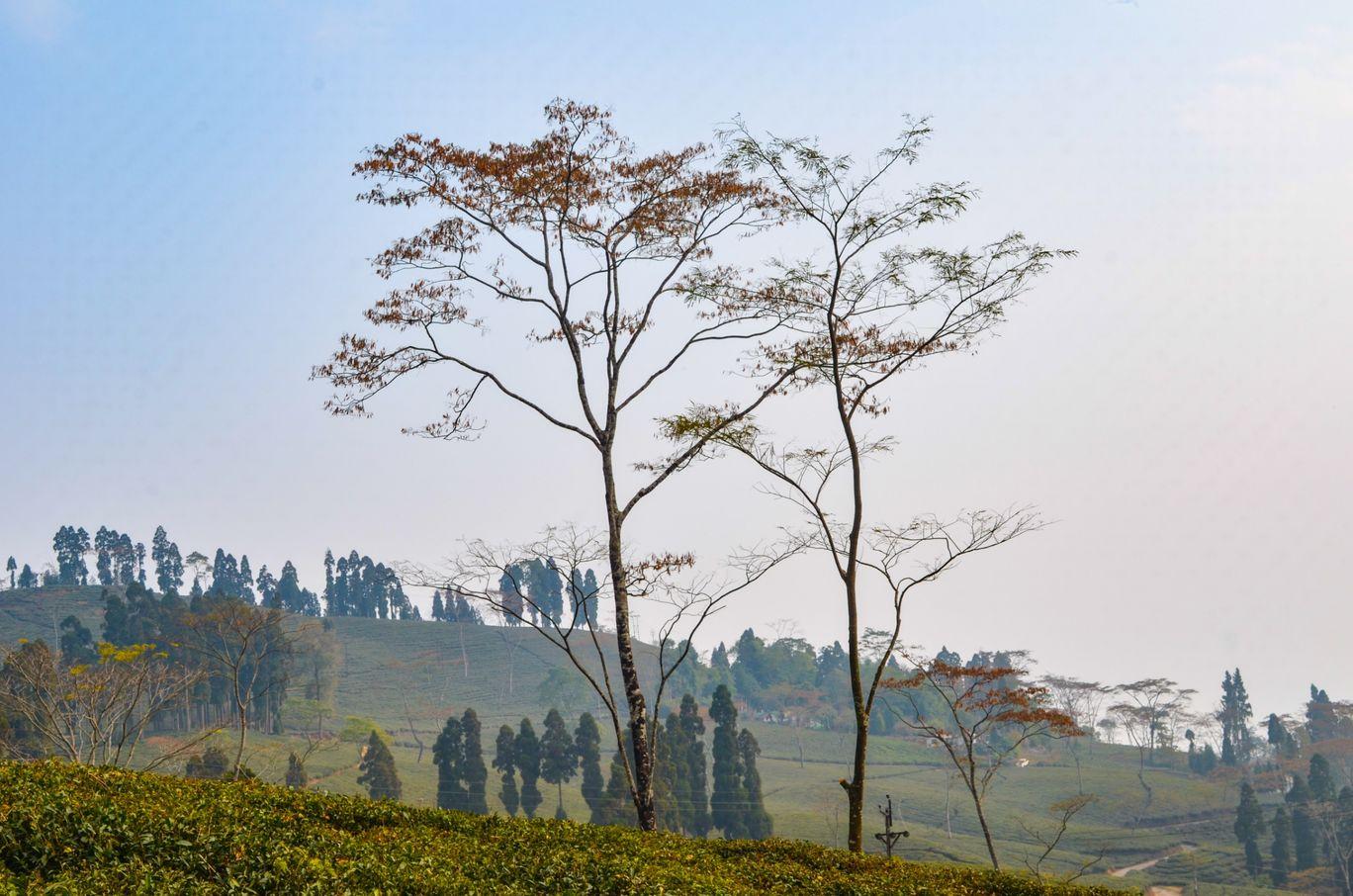 Photo of Takdah By Bongyatri - Sourav and Anindita