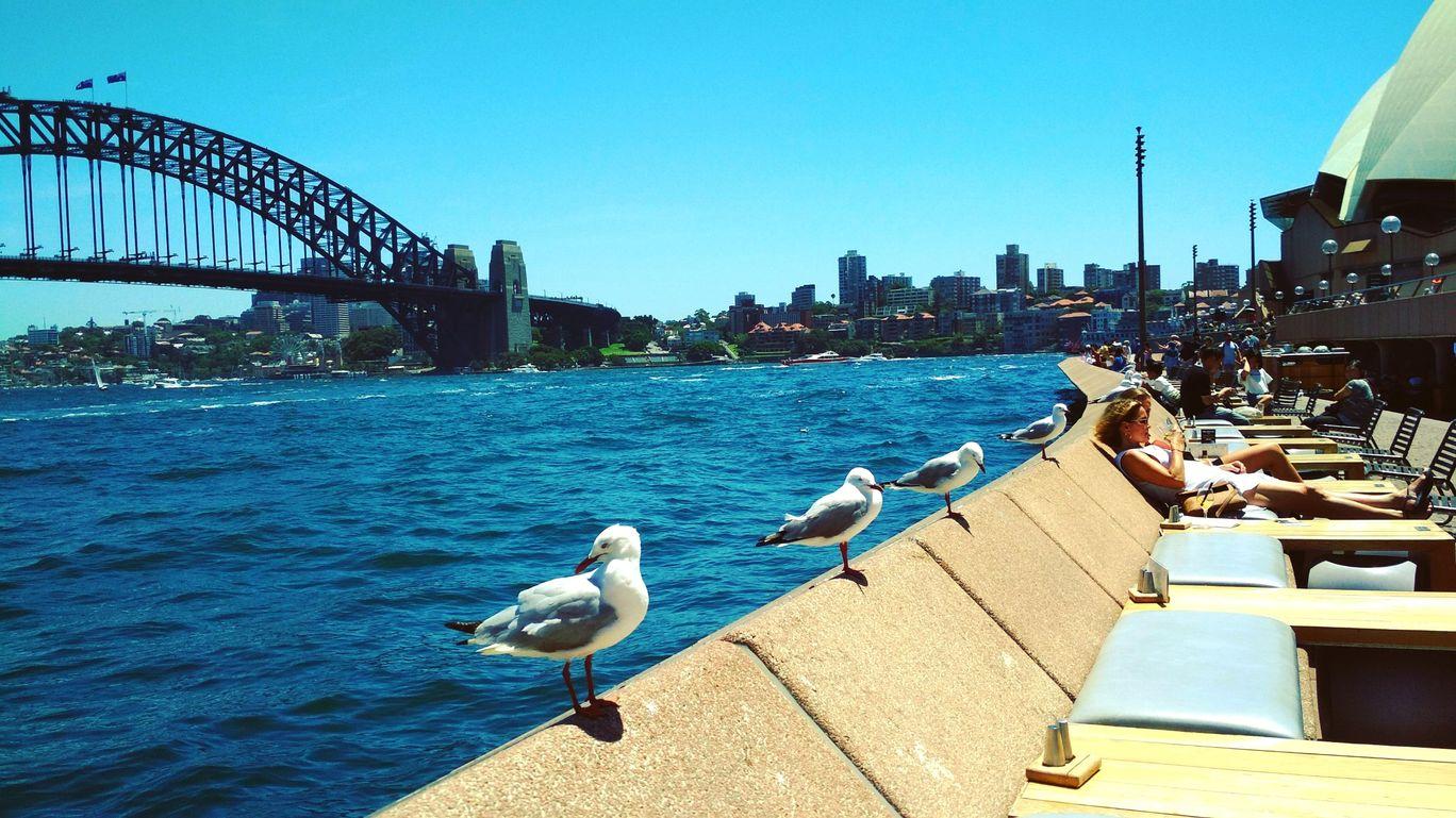 Photo of Sydney Opera House By Priya Kamra