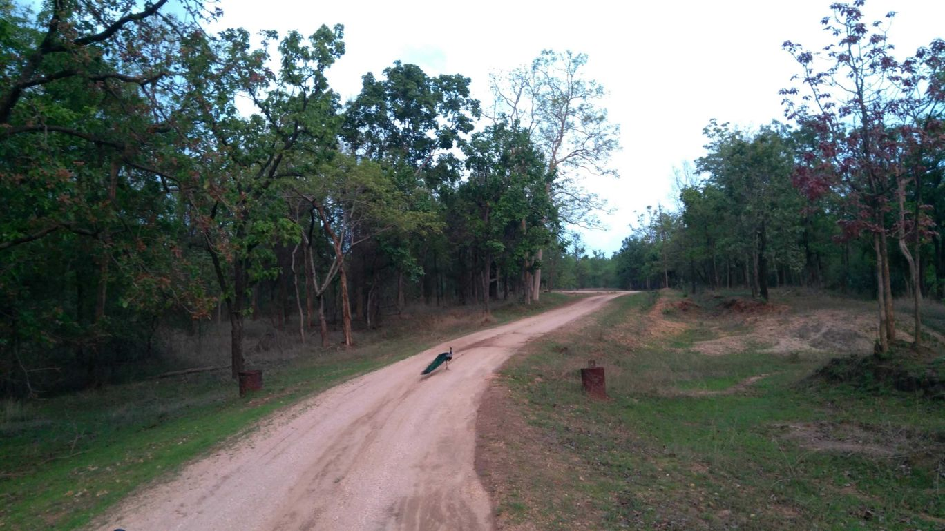 Photo of Pench Tiger Home By Gypsytipsytoes