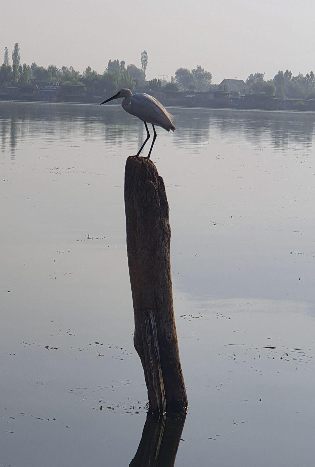 Photo of Dal Lake By Jitu Chaurasia
