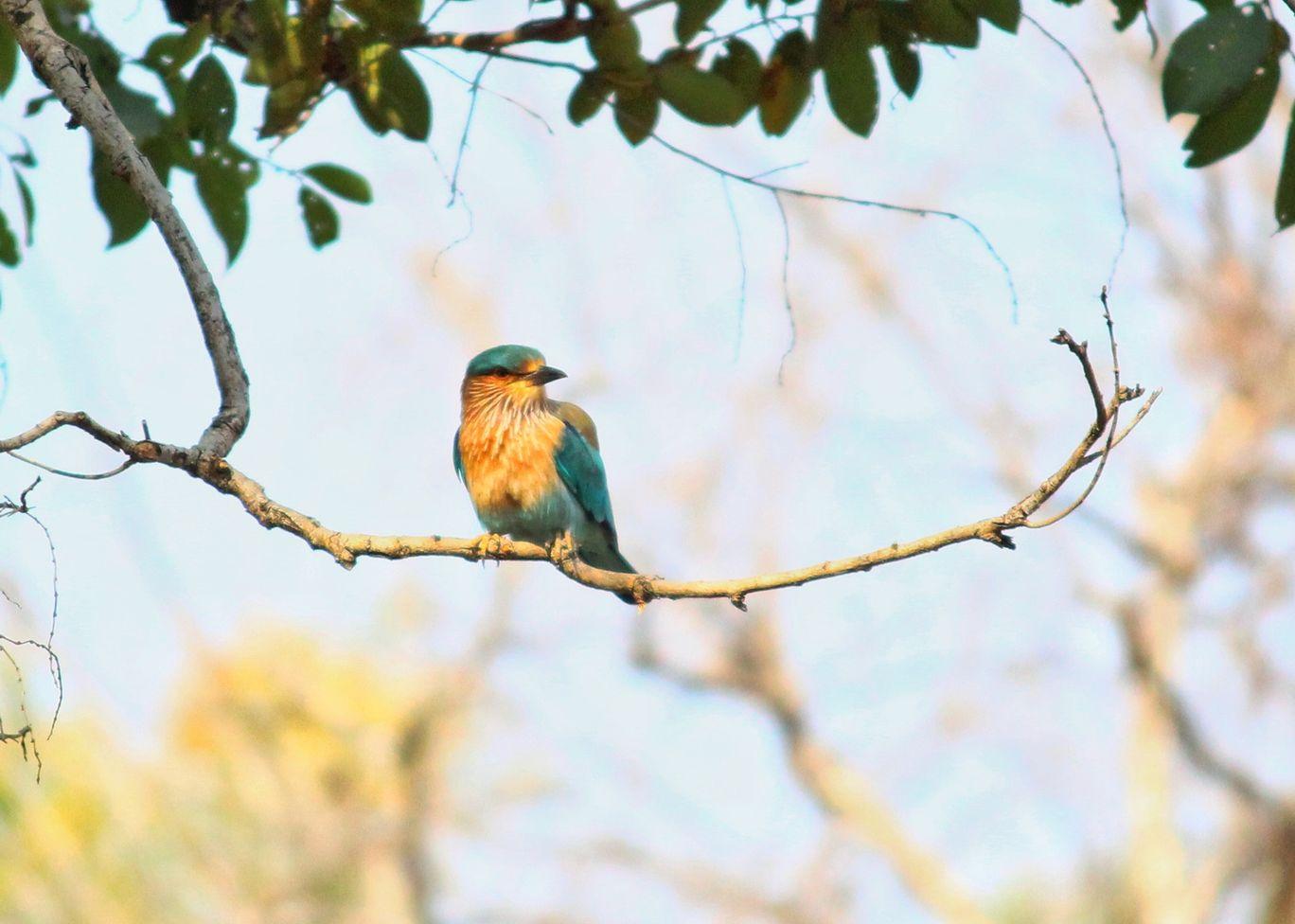 Photo of Bandhavgarh national park By Udvas Roy