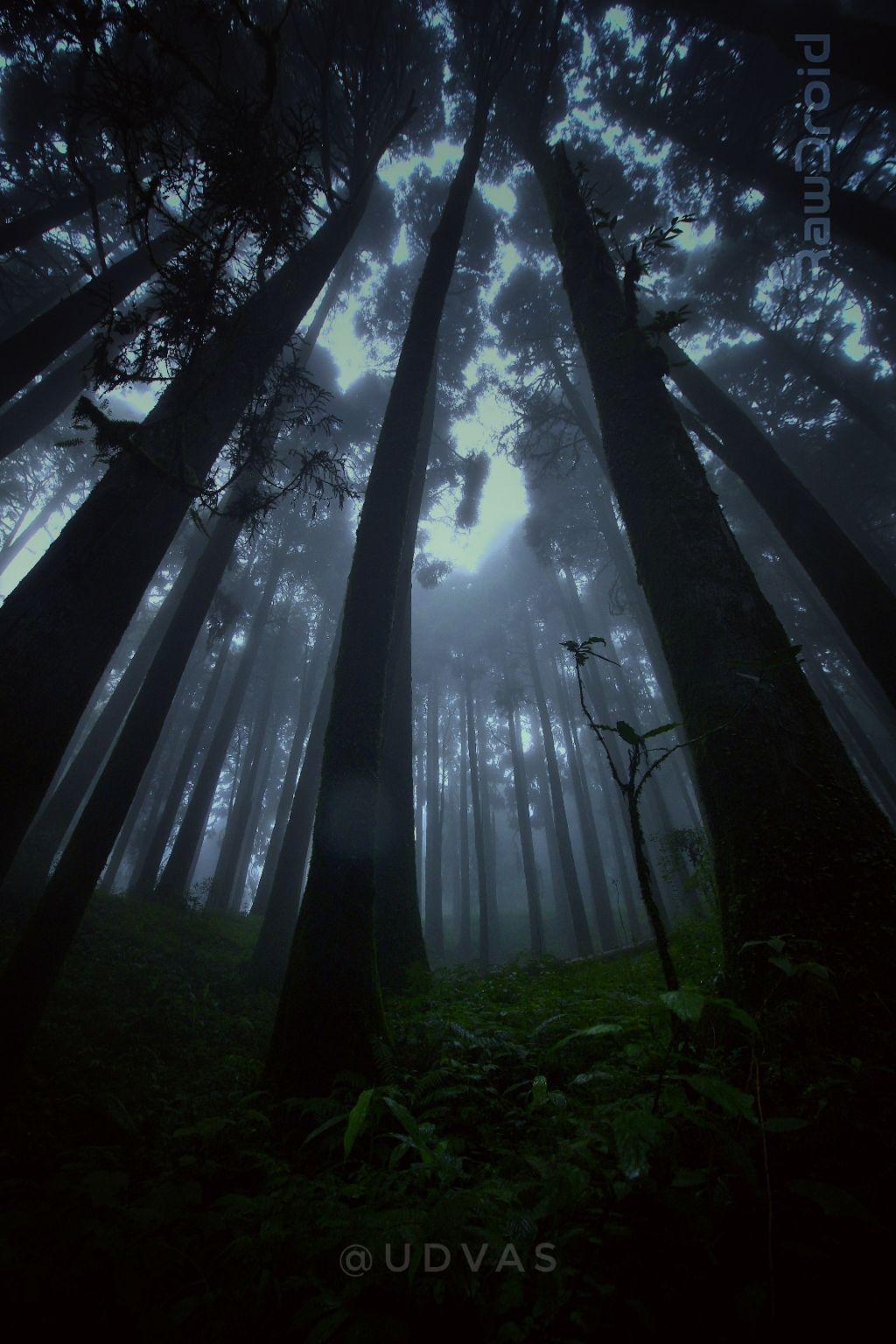 Photo of Darjeeling By Udvas Roy
