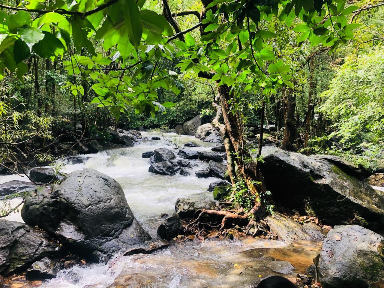 Photo of Dudhsagar Falls By Ankit Kumar
