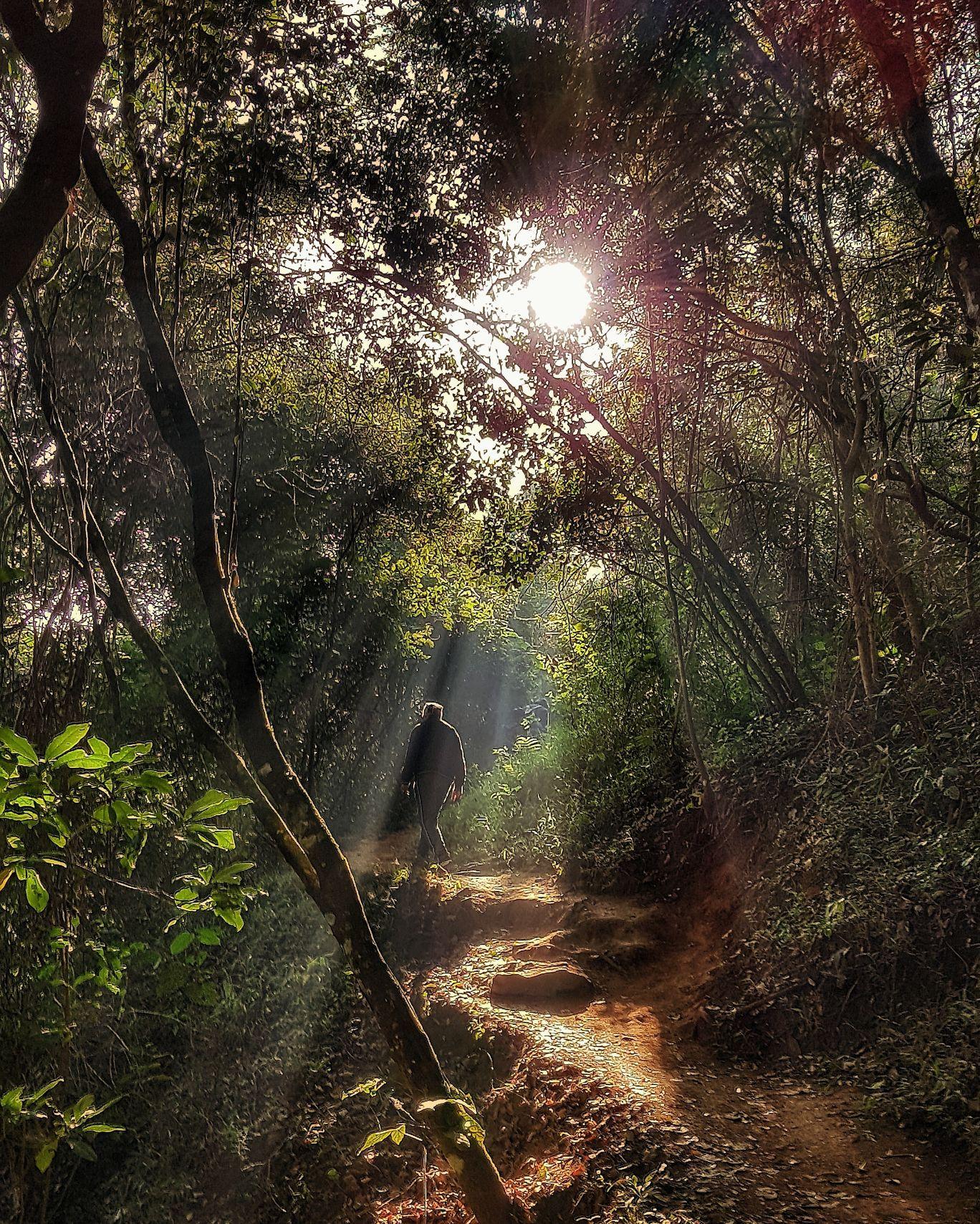 Photo of Chembra Peak By Ruchi
