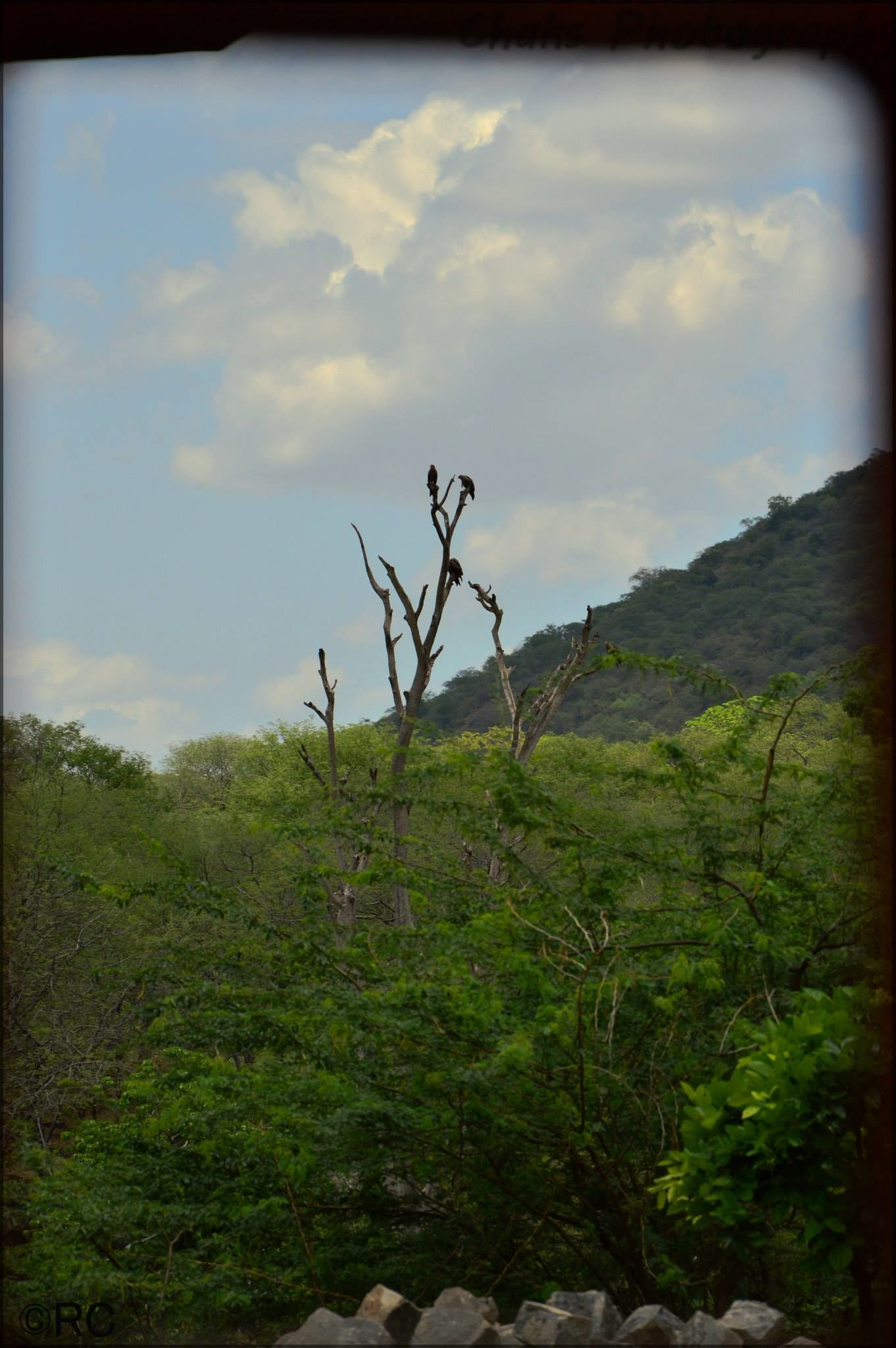Photo of One Day Trip - Hogenakkal Falls By Ranjan Chakraborty