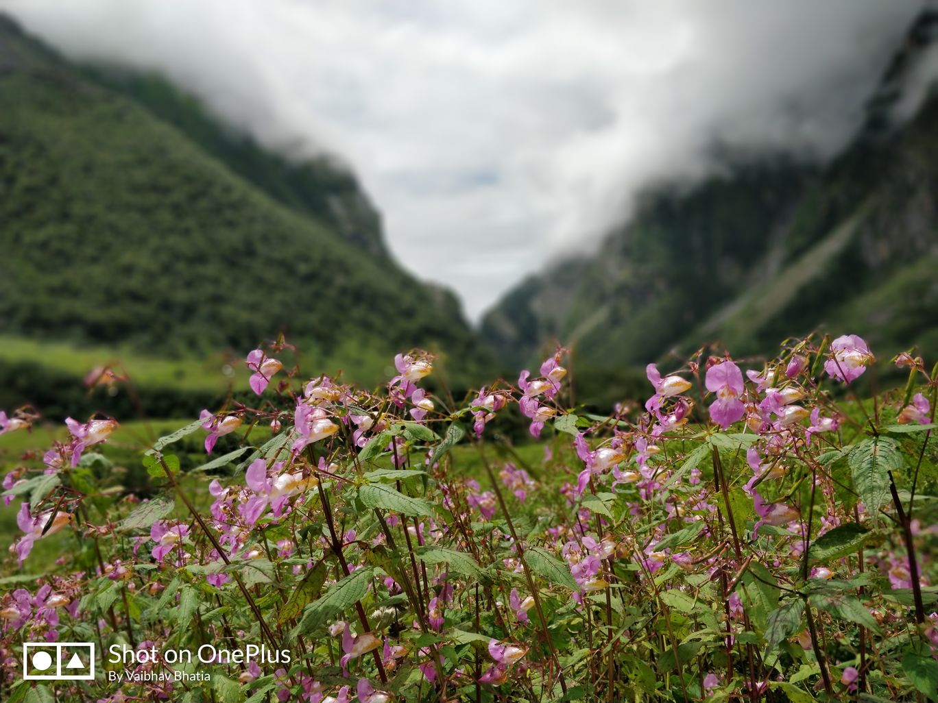 Photo of Valley of Flowers National Park By Vaibhav Bhatia