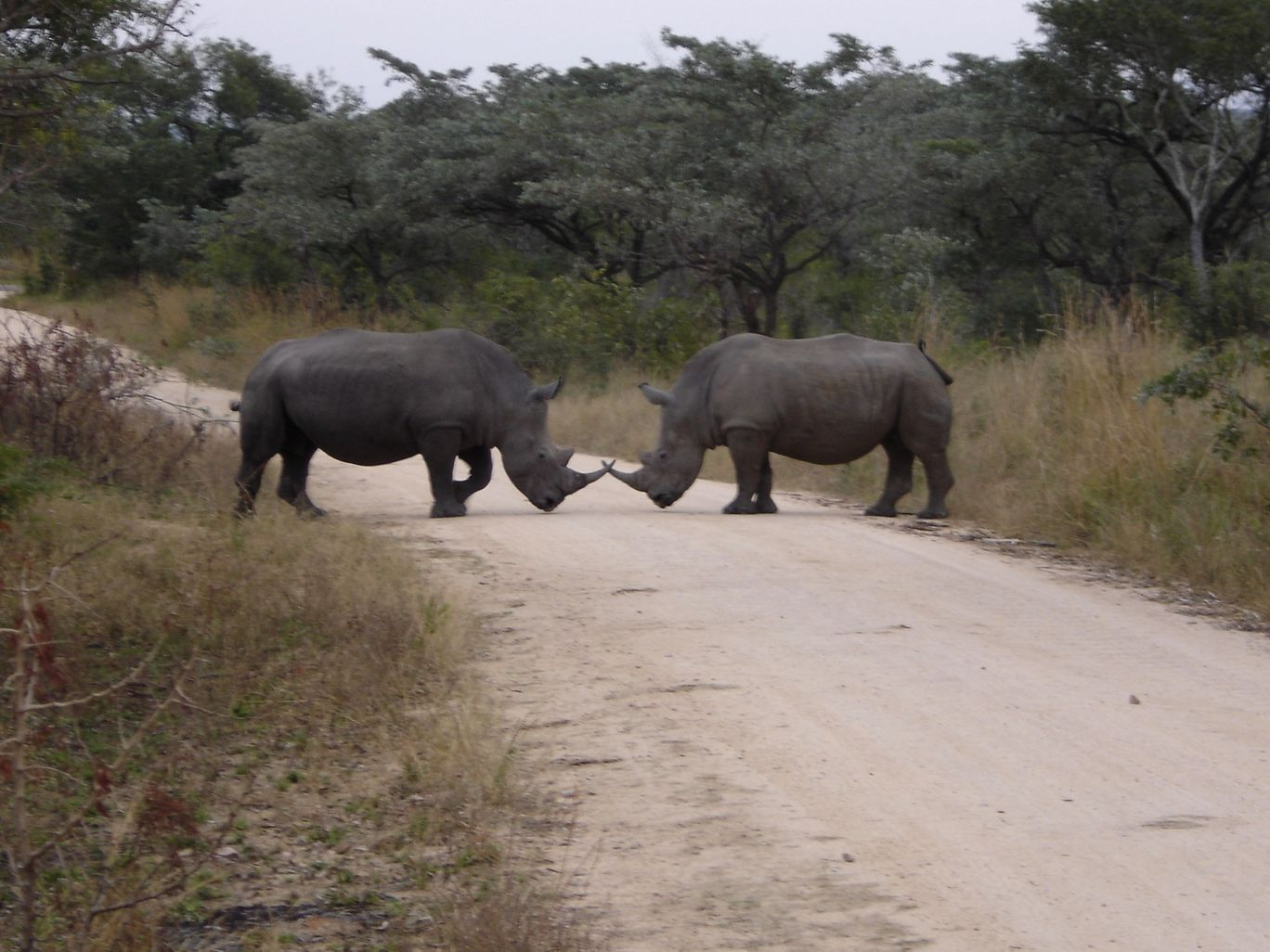 Photo of Kruger National Park By Gypsea Trip
