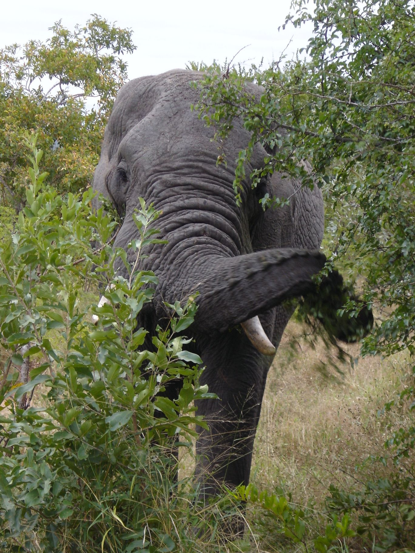 Photo of Kruger Park By Gypsea Trip
