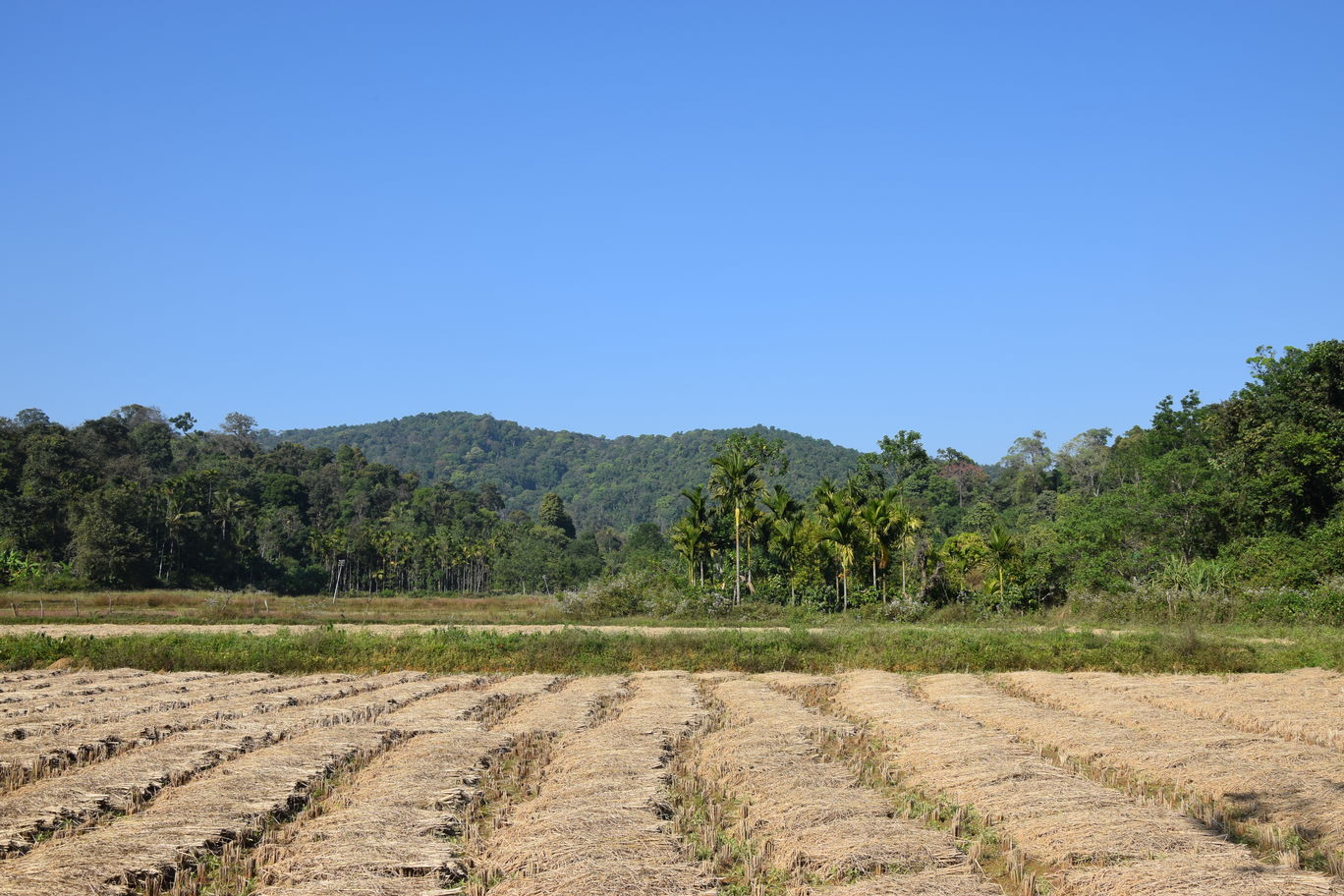 Photo of Coorg By Shreya Kanther