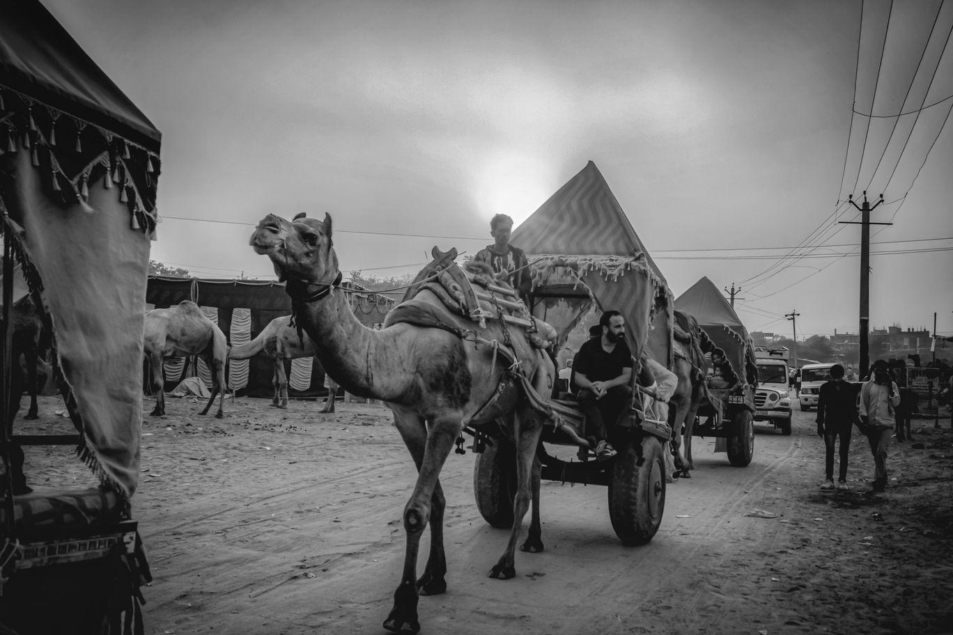 Photo of Pushkar By Mridupowan Baishya