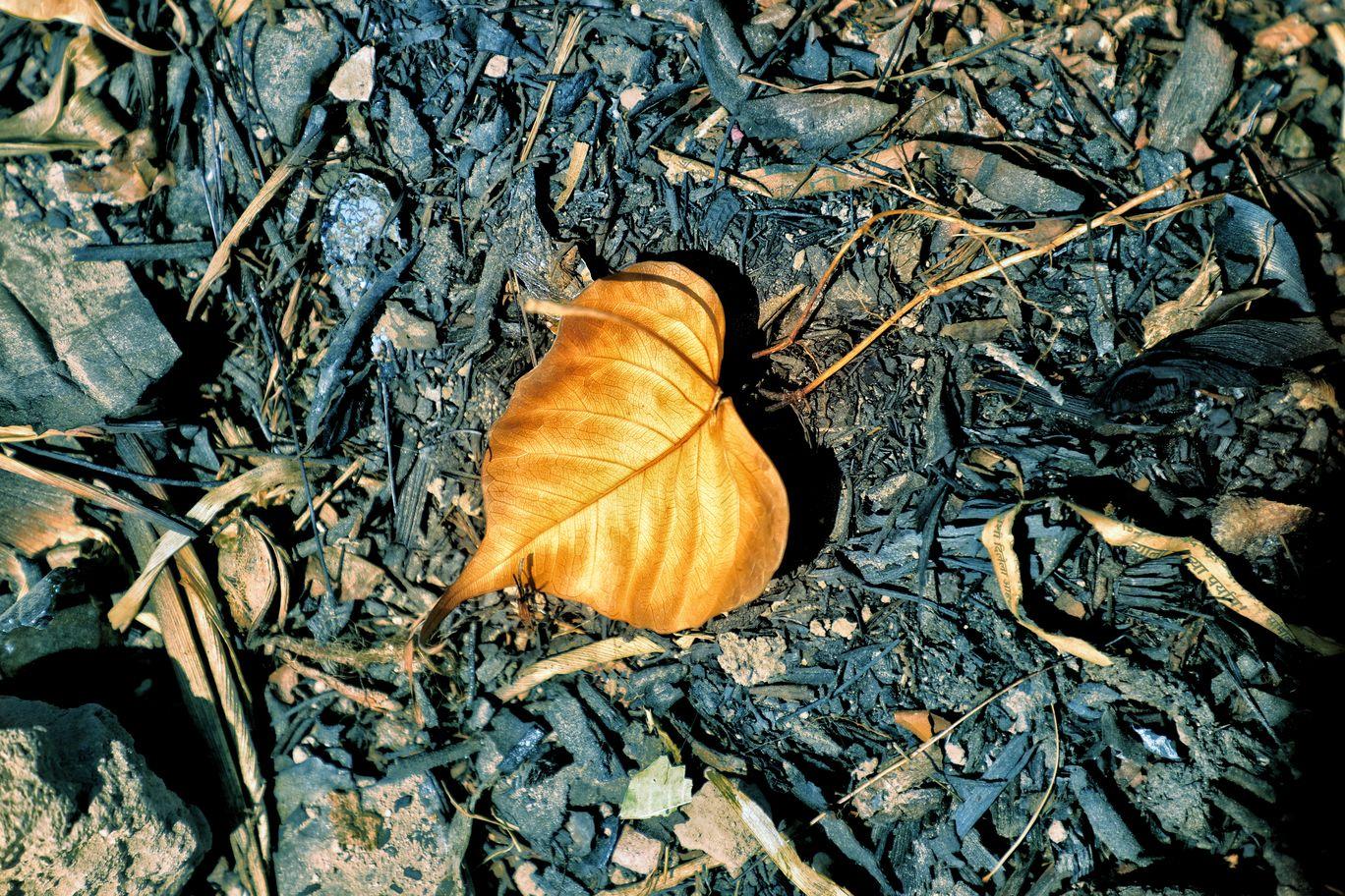 Photo of Fall season of 2018 By Kashish Lamba