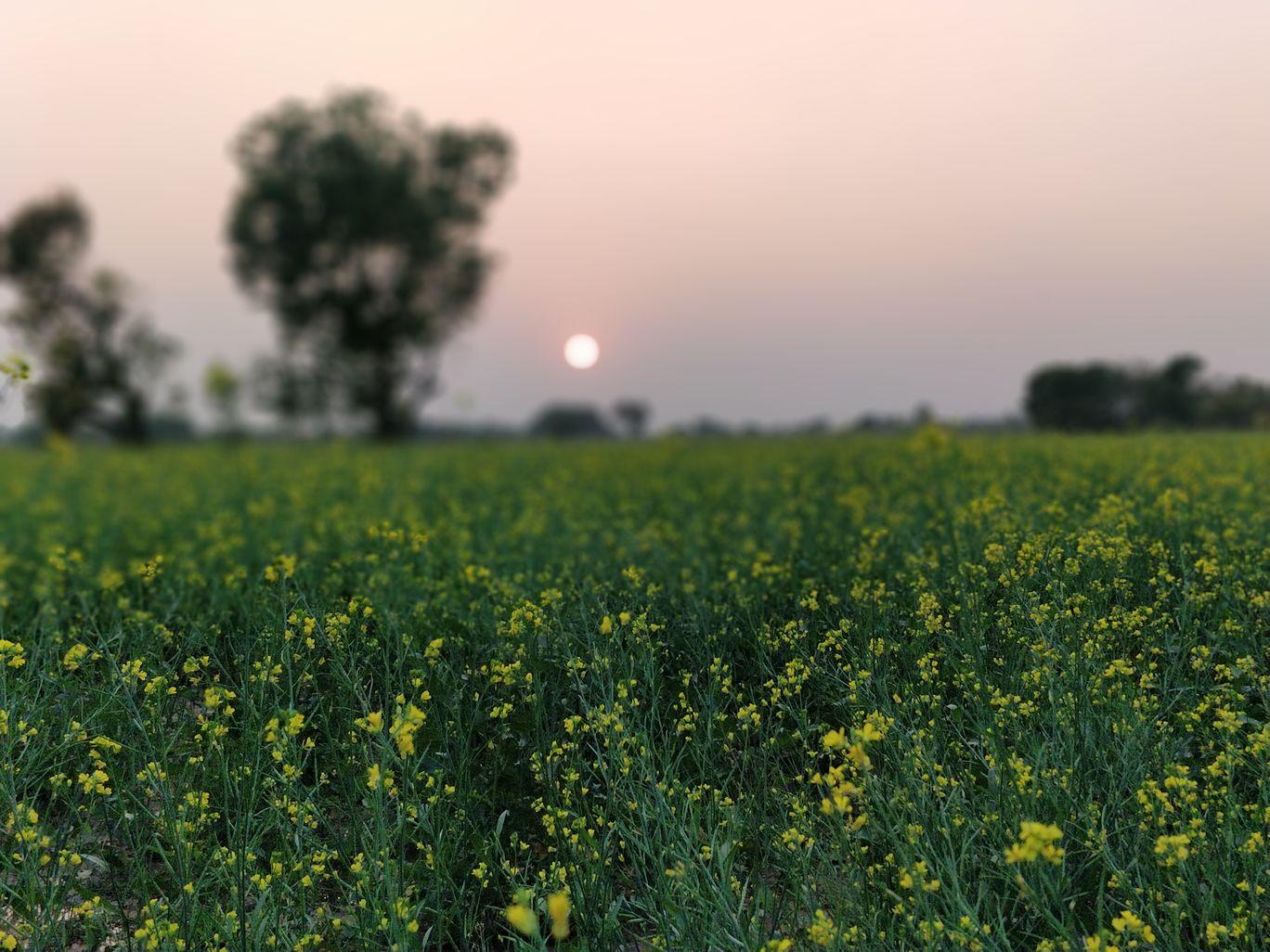 Photo of Dhanera By Bharat Chaudhary