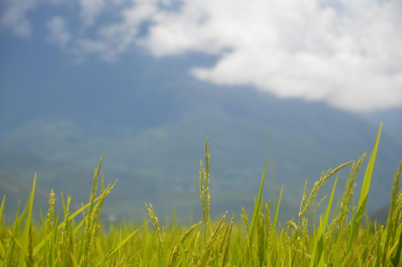 Photo of Bhutan By Megha Bhageria
