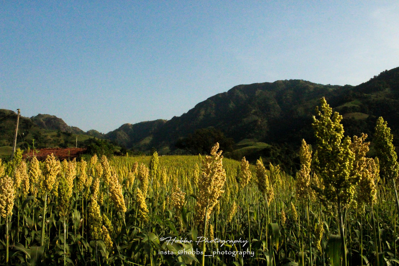 Photo of Umalla By Harsh Vyas