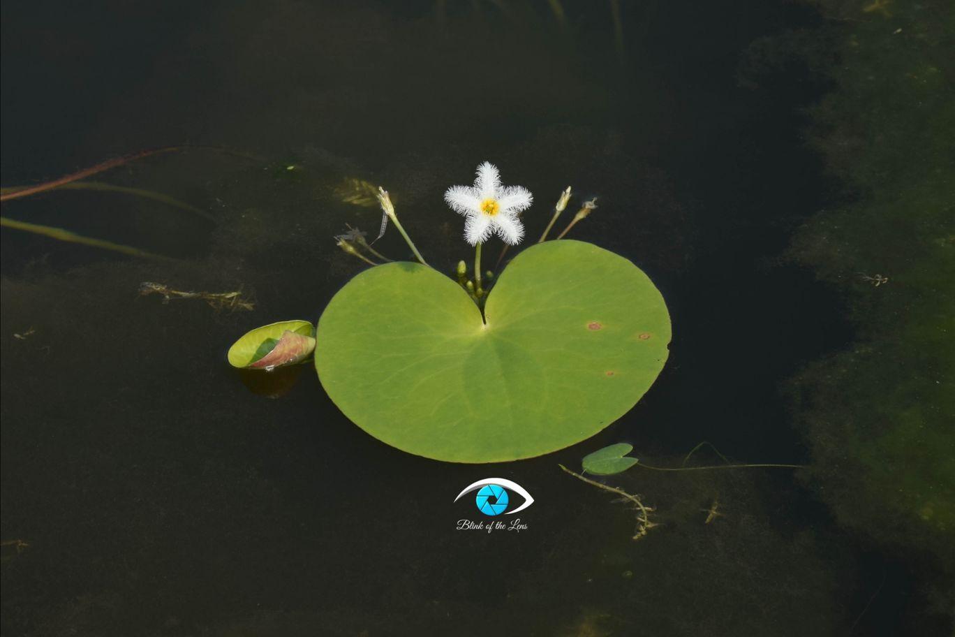 Photo of Kaas Plateau of Flowers By Krutarth Vashi