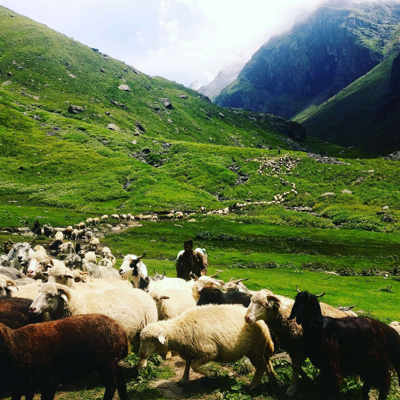 Photo of Himachal Pradesh By Mansi Singh