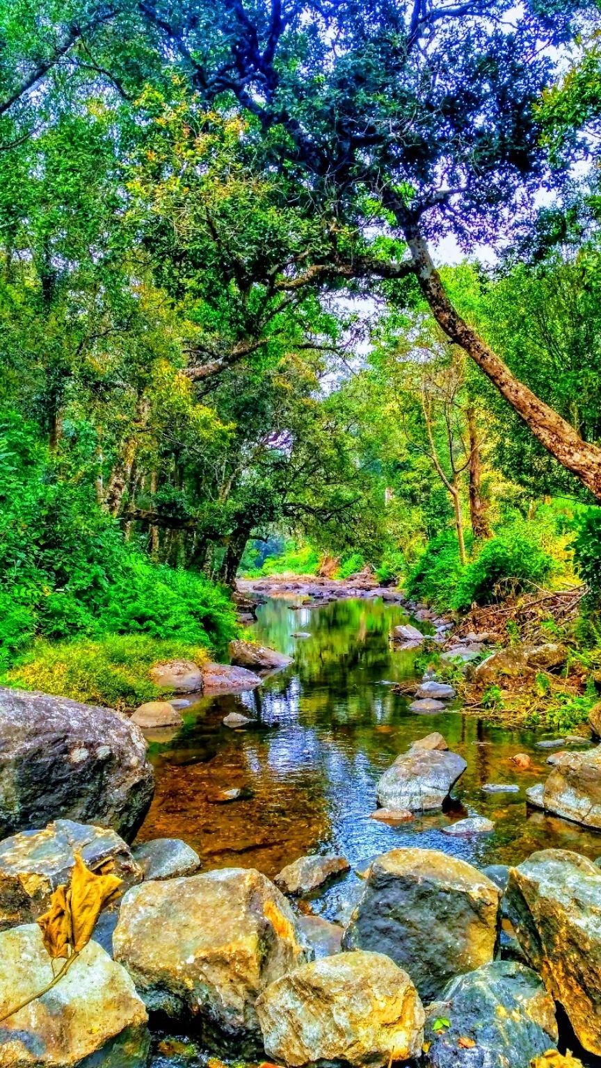 Photo of Wayanad By Sooraj Sathyan