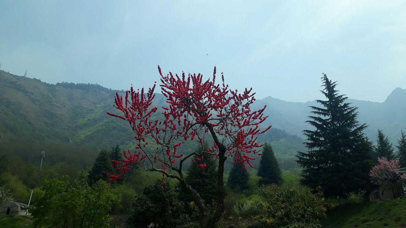 Photo of Tulip Garden By Subhasree Mandal