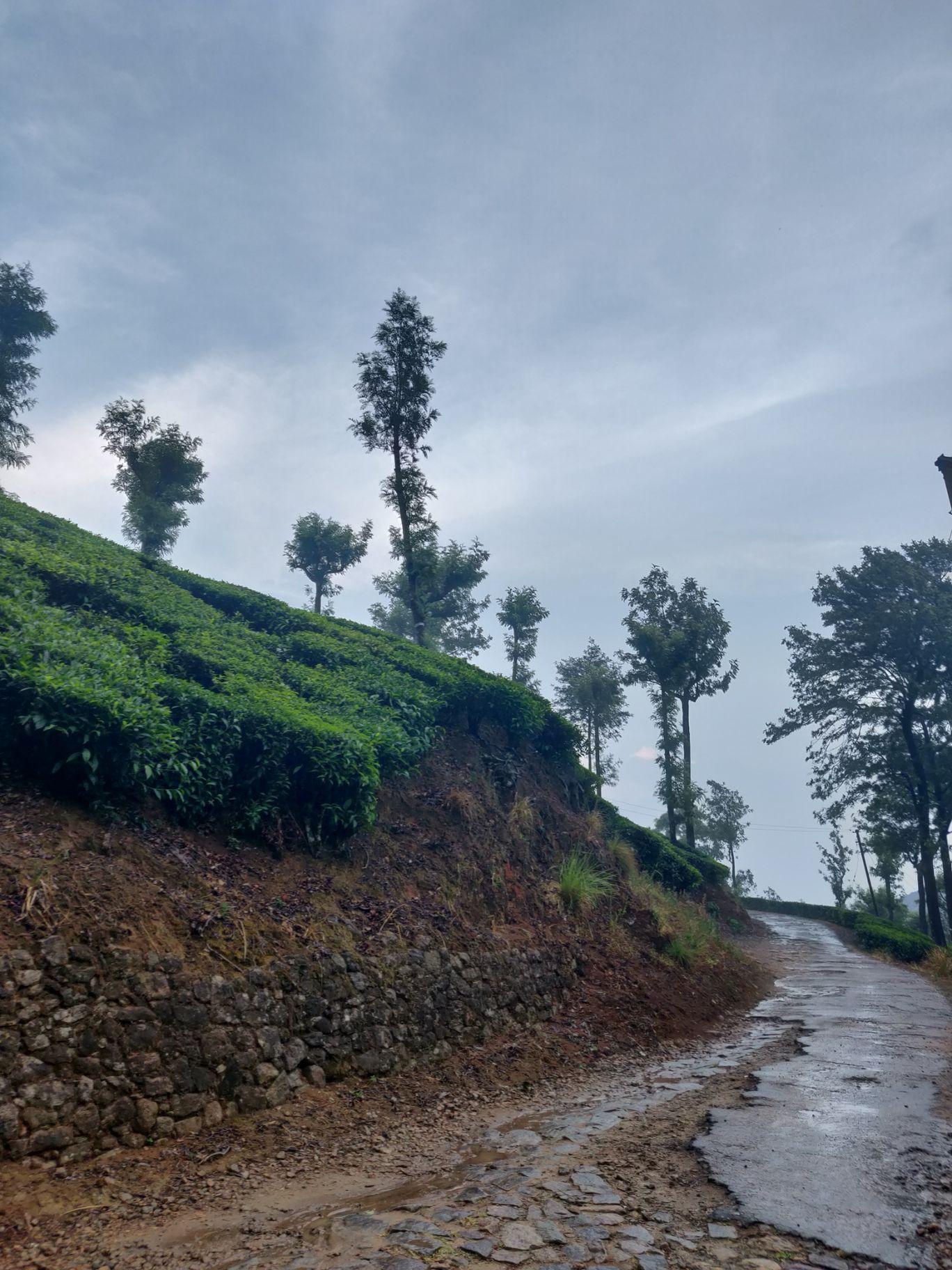 Photo of Valparai By Samyuktha Subramani