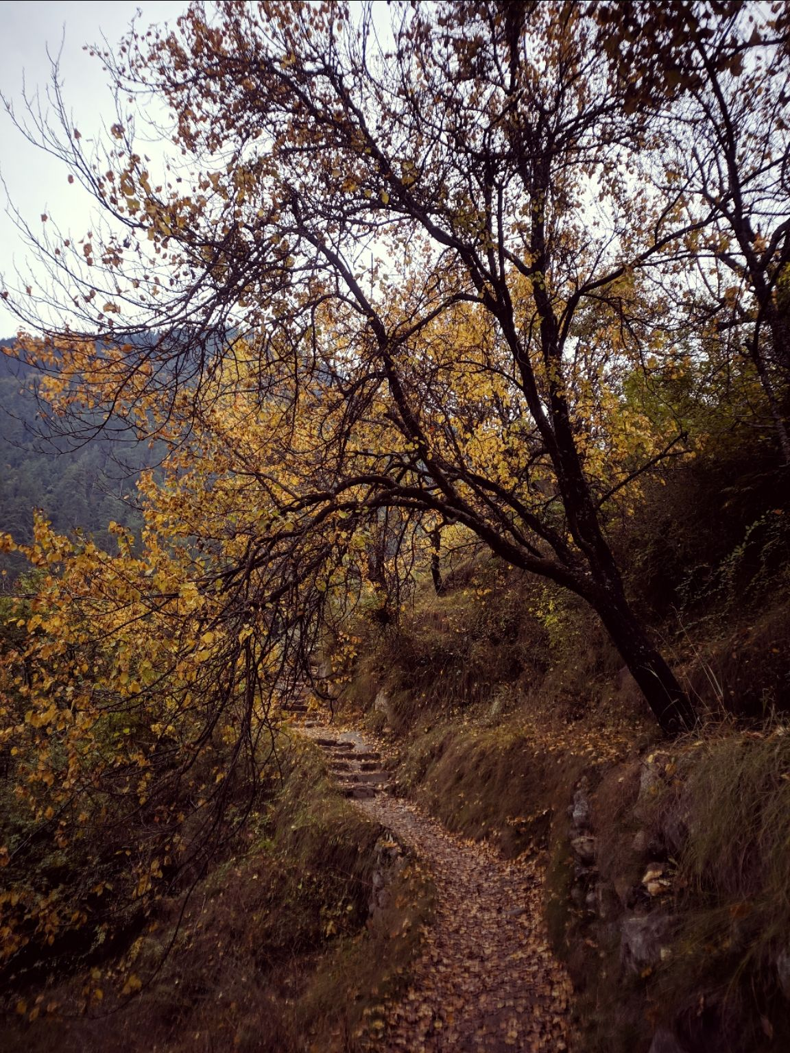 Photo of Tirthan Valley By The Brown Explorer