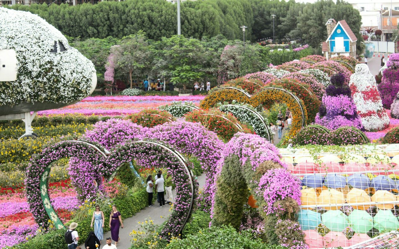 Photo of Miracle Garden - Dubai - United Arab Emirates By Pradnya Katke