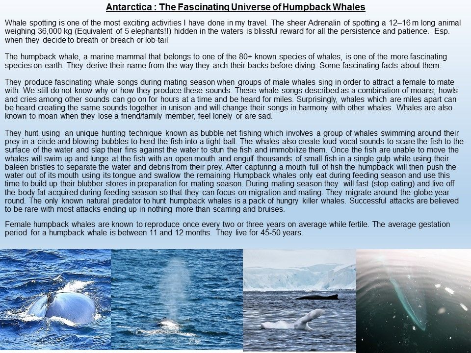 Photo of Antarctica :The Fascinating Universe of Humpback Whales By Shridhar Sethuram Iyer