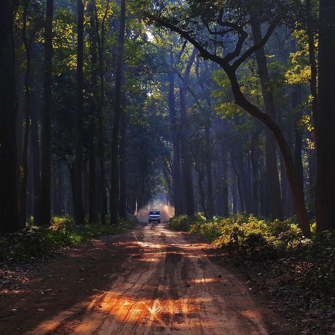 Photo of Dudhwa National Park By Arindam Aditya