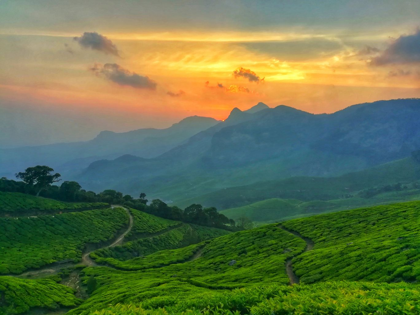 Photo of Kolukkumalai Tea By Bulu Balachandran