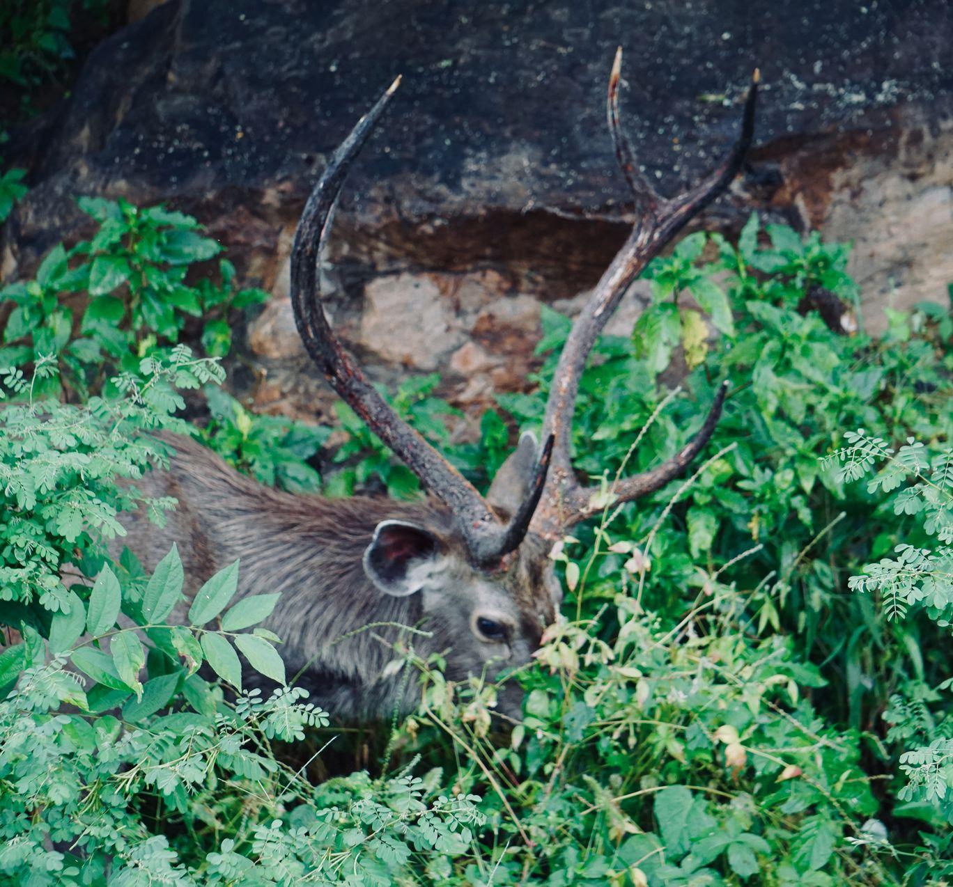 Photo of Sariska Tiger Reserve By deepali sukhija