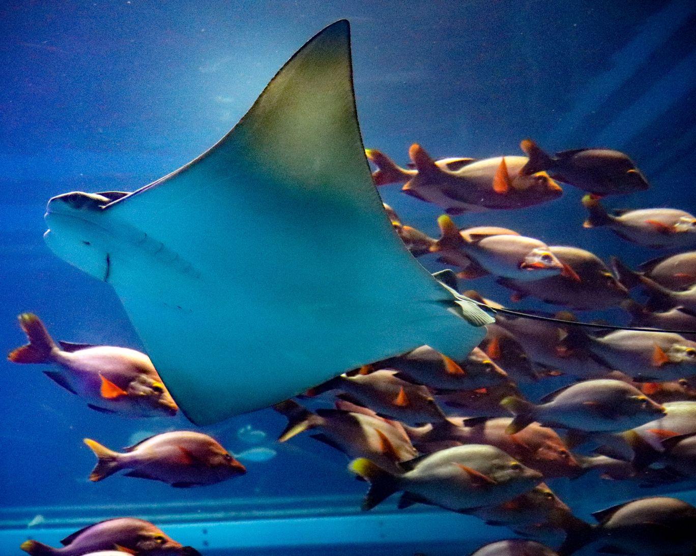 Photo of Osaka Aquarium By Vishwanath Moolya