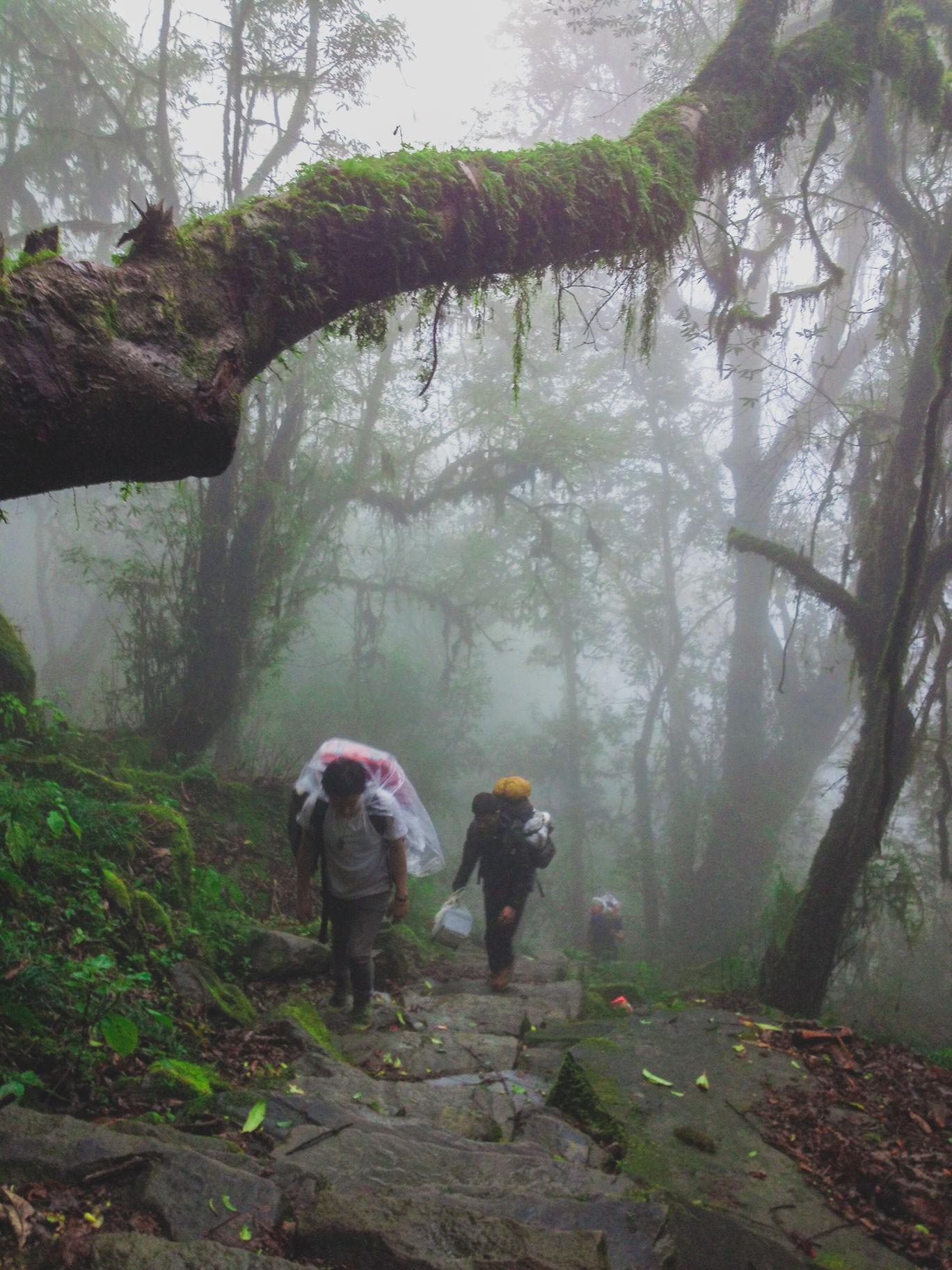 Photo of Dzükou Valley By Vishal Prasad