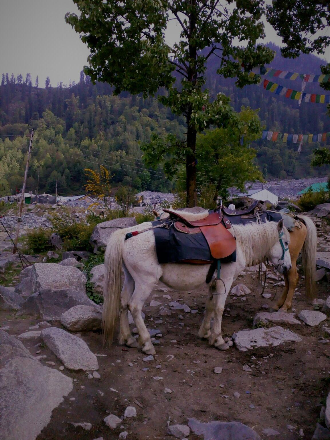Photo of Photo Blog : Solang on a horseback - A trek beside Beas River #adventureactivity By Ankita Sagar