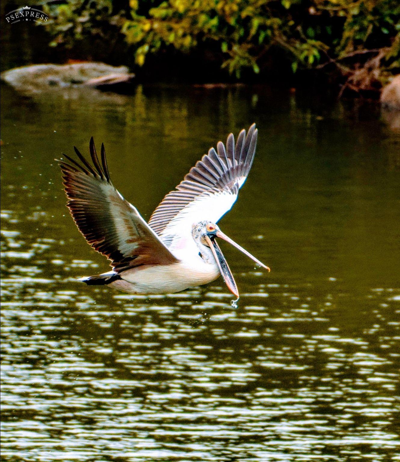 Photo of Ranganathittu Bird Sanctuary By mohan kumar
