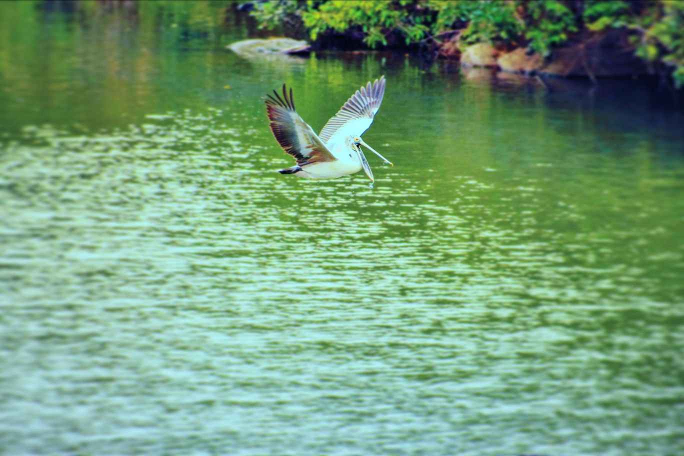 Photo of Ranganathittu Bird Sanctuary By mohan kumar