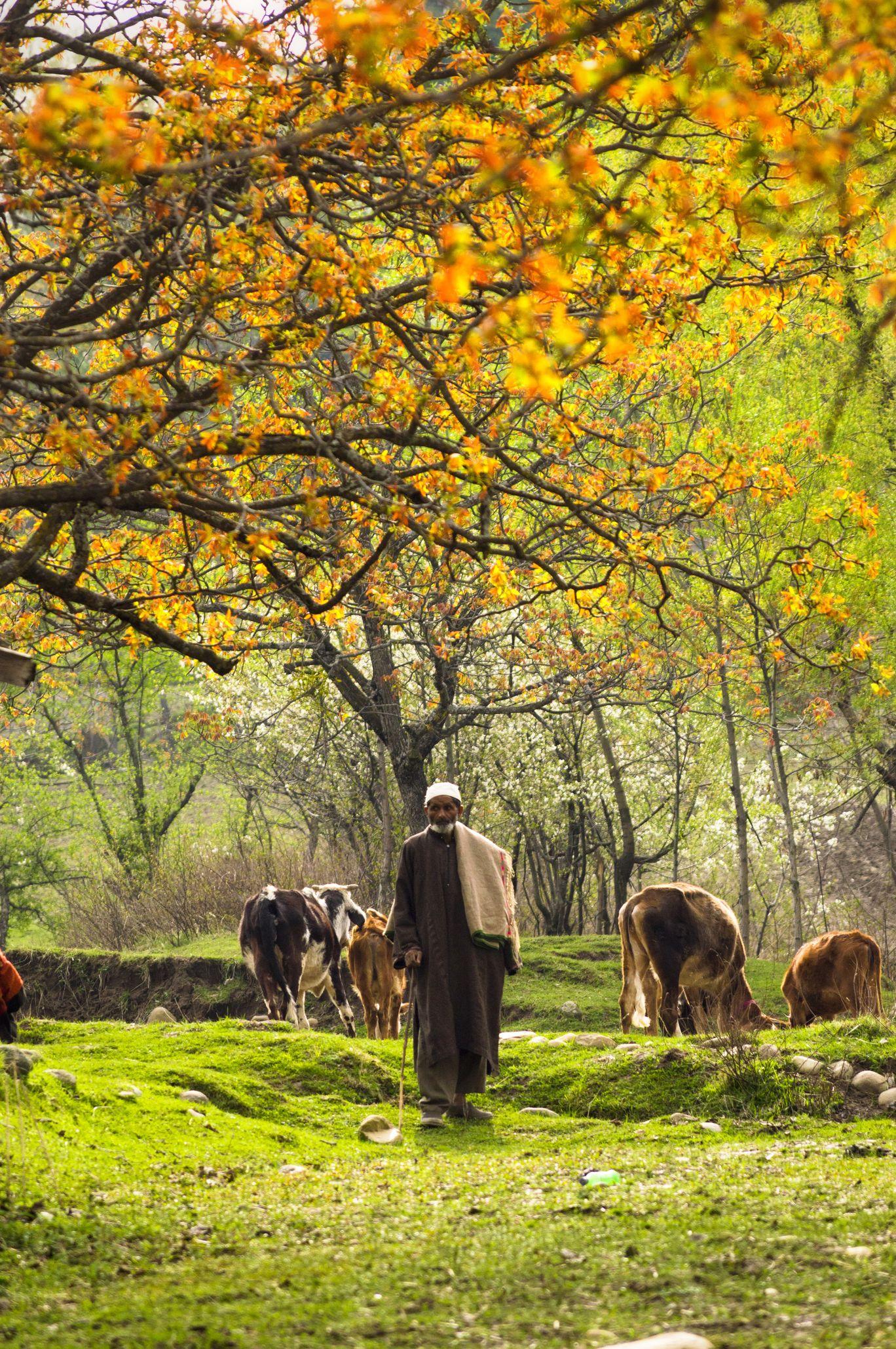 Photo of Khan Sahib By Akash Mendpara