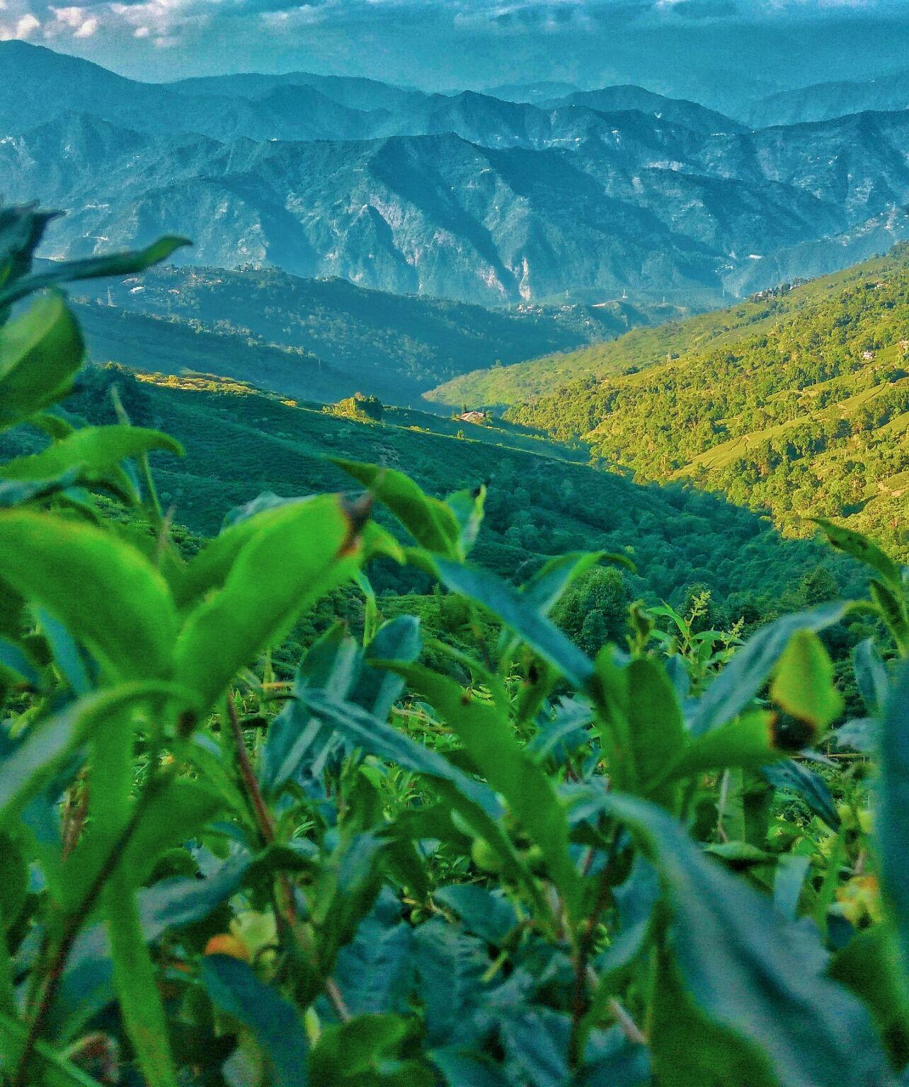 Photo of Darjeeling By Abhinav Dev