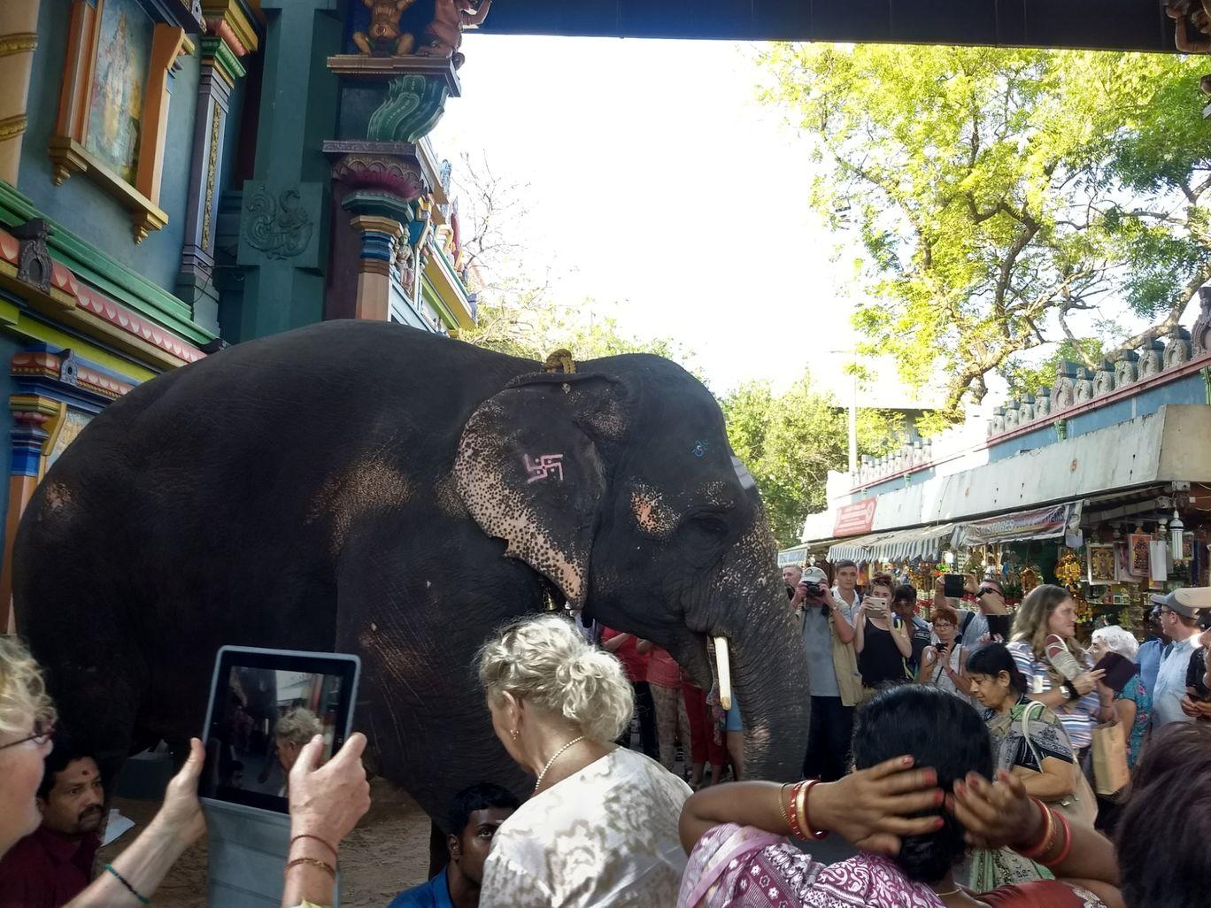 Photo of Pondicherry By Niranjan Rajavel