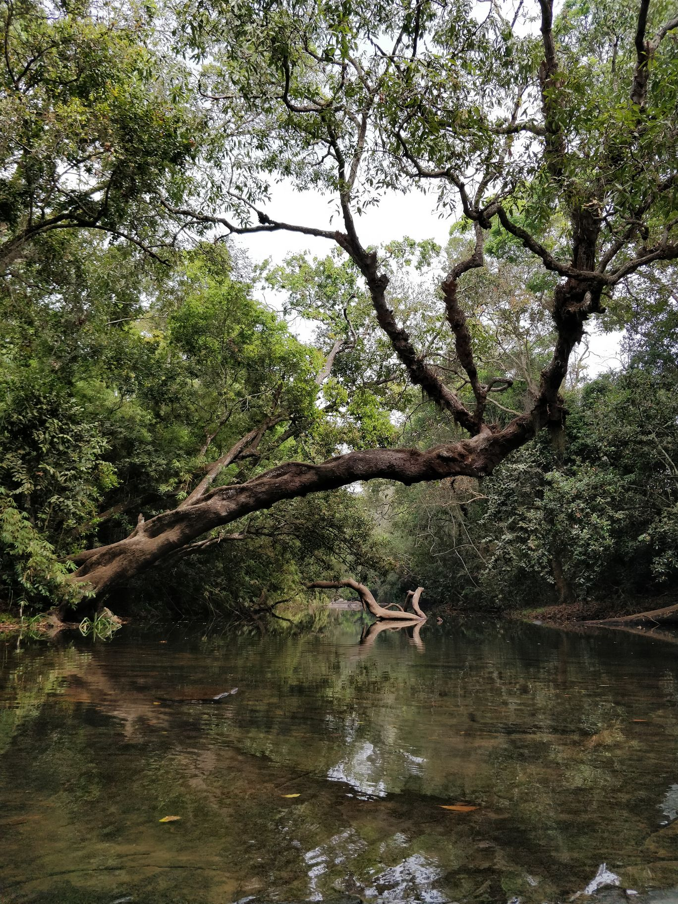 Photo of Nisargadhama By Roshani Rathi